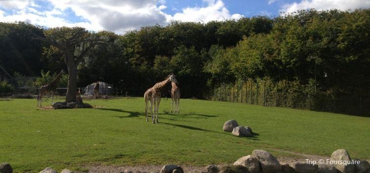 Aalborg Zoo2