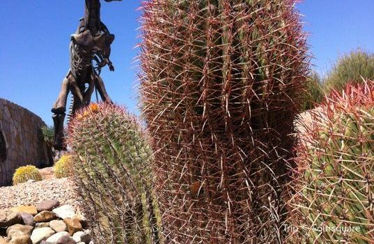 Museo del Desierto1