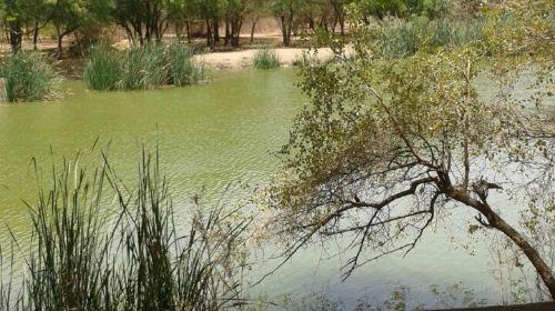 Reserve De Bandia