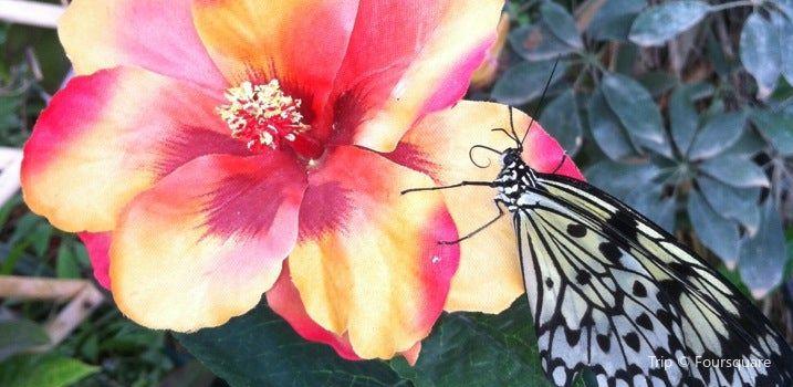 La Serre aux Papillons3