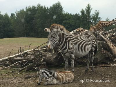 Safaripark Beekse Bergen B.V.