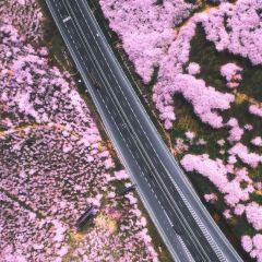 和田國際步行街用戶圖片