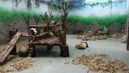 大熊貓一號別墅