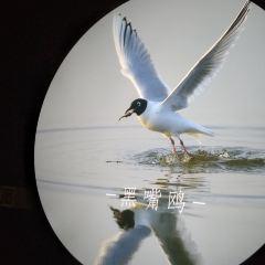 紅海灘濕地科學館用戶圖片