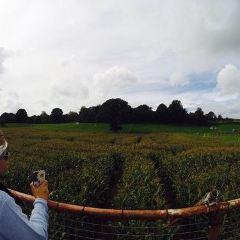 Lakeland Maze Farm Park用戶圖片