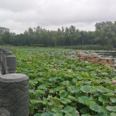南池景區用戶圖片