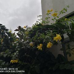 Hainanshifan University User Photo