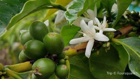 Kona Farm Direct Coffee