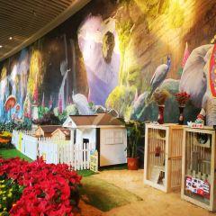 花之城用戶圖片