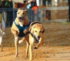 Shanghai Wild Animal Park Dog Racetrack User Photo