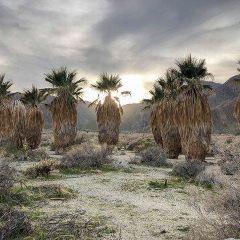 Anza-Borrego Desert State Park用戶圖片