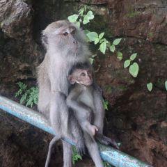 호랑이사원 여행 사진