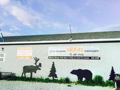 Gros Morne Wildlife Museum