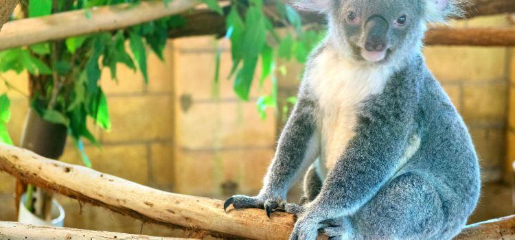 Lone Pine Koala Sanctuary2