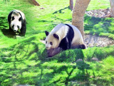 Linyi Zoo and Botanical Garden