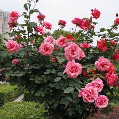 Yueji Park User Photo