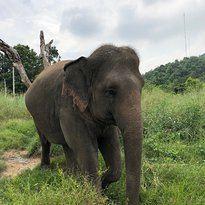 霍特薩丁大象基金會2
