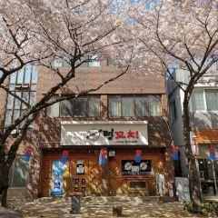 벚꽃 거리 여행 사진