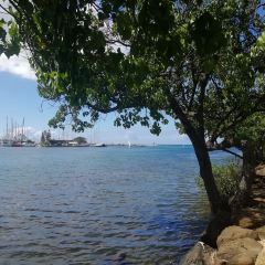 阿拉莫納海灘公園用戶圖片