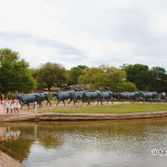Dallas Cattle Drive Sculptures User Photo