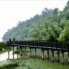 柳樹灣用戶圖片