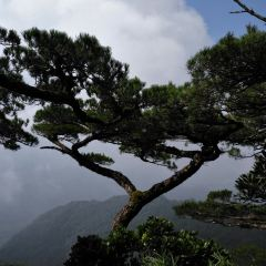 Wuzhishan National Nature Reserve User Photo