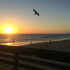 Newport Beach User Photo