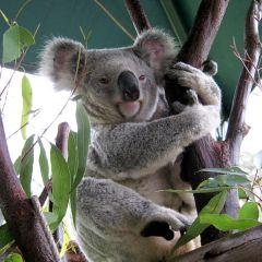Australia Zoo User Photo