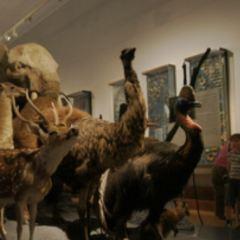 Kulturhistorische Museum User Photo