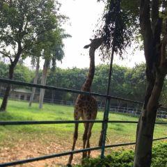 Nanning Zoo User Photo
