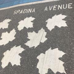 Spadina Avenue User Photo