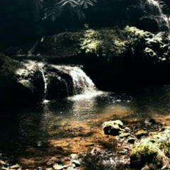 夏威夷熱帶植物園用戶圖片