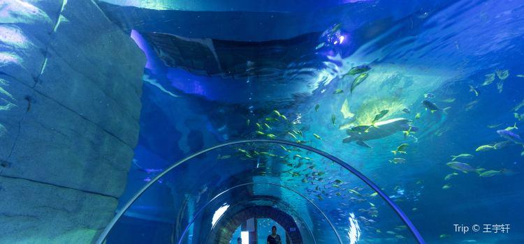 Grandview Aquarium2