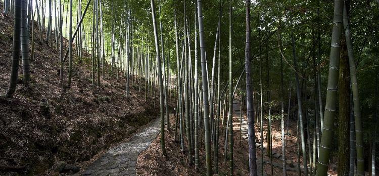 Yaolin National Forest Park2