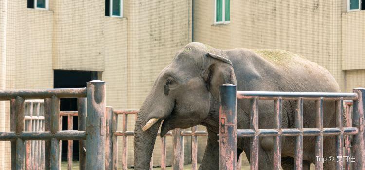 重慶動物園3