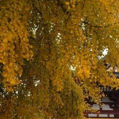 Imamiya Ebisu Shrine User Photo