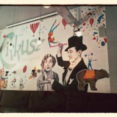 Cirkusz用戶圖片