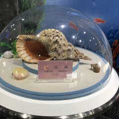 야롱베이 조개전시관 여행 사진