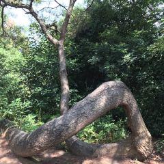 Longfeng Island User Photo