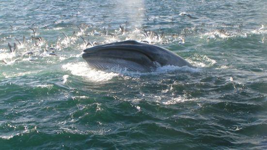 奧克蘭鯨魚海豚發現之旅