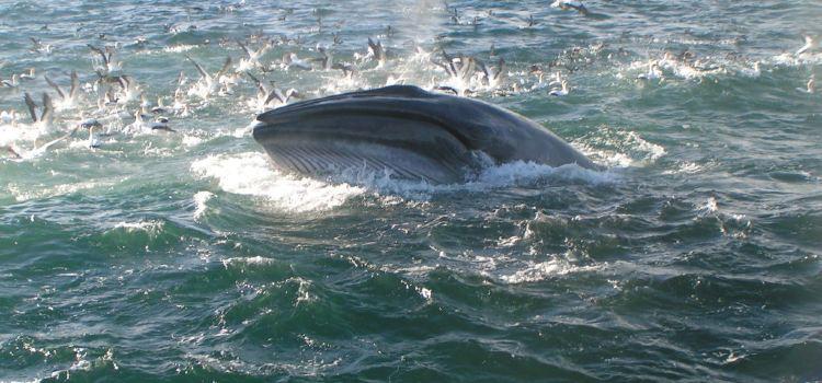 Auckland Whale & Dolphin Tour
