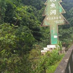 Huayudong National Forest Park User Photo