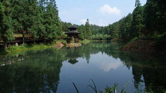 綠荷塘古楠木森林公園