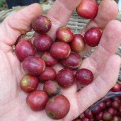 Beansmith Coffee Roasters用戶圖片