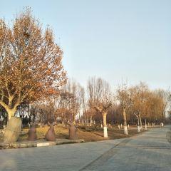 Shijiazhuang Botanical Garden User Photo
