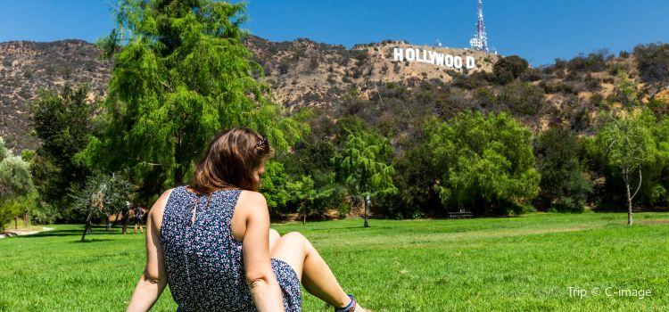Hollywood Hills1
