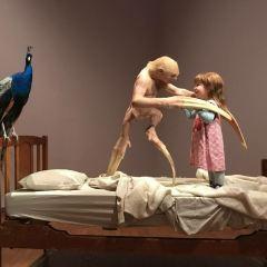 澳洲國家肖像畫廊用戶圖片