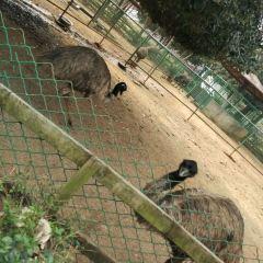 Guilin Zoo User Photo