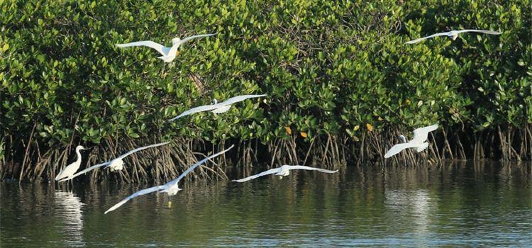 Dongzhaigang mangroves1