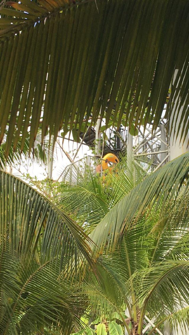 Amazon Jungle Water Park
